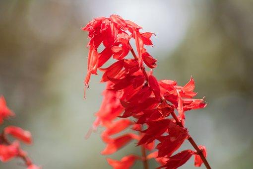 Flower, Flowers, Small Flower, Spring, Florir, Flowery