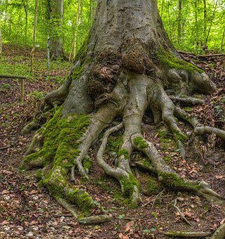 Root, Tree, Forest, Nature, Moss, Log, Green, Tree Root