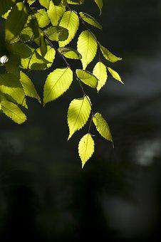 Nature, Wood, Backlight, Forest, The Leaves, Spring