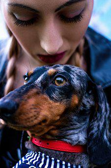 Best Friend, Dachshund, Dog, Girl, Portrait, Summer