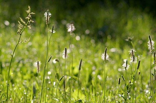 His Grandmother, Flower, Grass, Rosa, Shine, Bokeh
