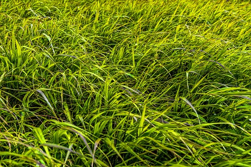 Grass, Meadow, Green, Nature, Grasses, Blade Of Grass