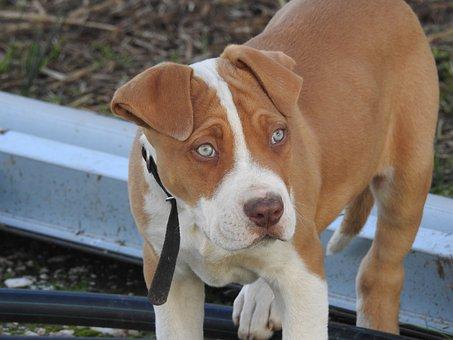 Dog, Pup, Puppy, Animal Eyes, Cute, Poised, Animal