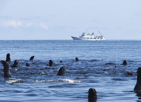 Navy Seals, Rookery, Sea, Harem, Sea stones, Calm