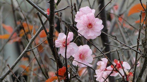 Flower, Yu Lee, Spring