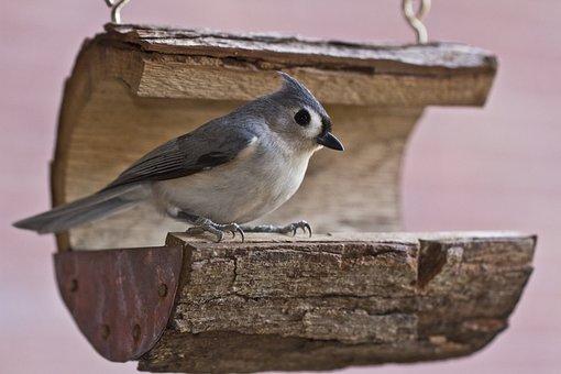Tufted Titmouse, Bird, Titmouse, Tufted, Wildlife