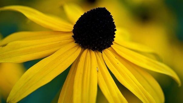 Flower, Yellow, Yellow Flower, Plant, Nature