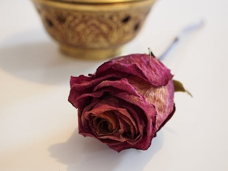 Rose, Dried, Red, Love, Transience, Noble, Appreciation
