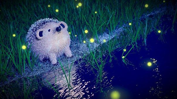 Hedgehog, Night, Firefly, River, Blender, Nocturne