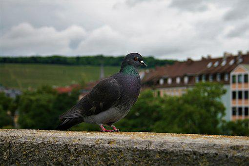 Dove, Wall, Bird, Fortress, Nature, Castle, Mood