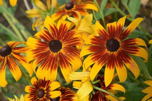 Summer Flowers, Yellow Powder, Garden, Nature