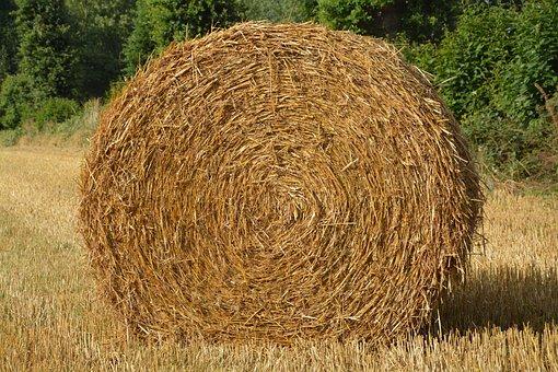 Roumballer Straw, Nature, Pre, Farmer, Field, Grass