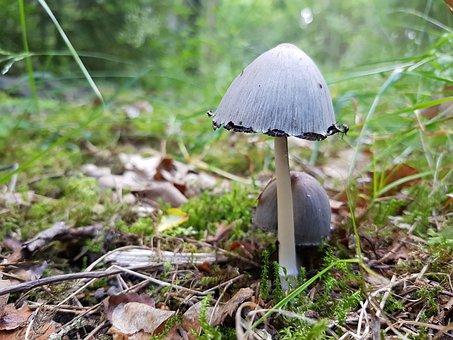 Mushroom, Forest, Moss, Green, Funnel
