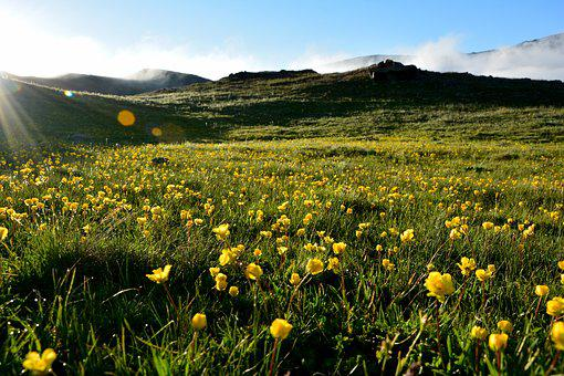 Reverse Light, Flower, Nature, Macro, Spring Flowers