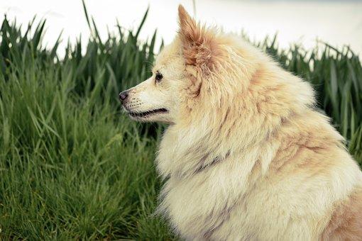 Dog Portrait, Dog, Meadow, Animal, Sweet, Attentive Dog