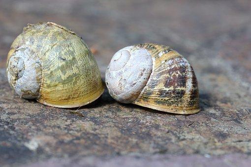 Snail, Slimy, Nature, Shell, Mollusk, Escargot, Mollusc