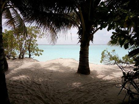 Thoddoo, Maldives, Sea, Ocean, Water, Todd, Turquoise