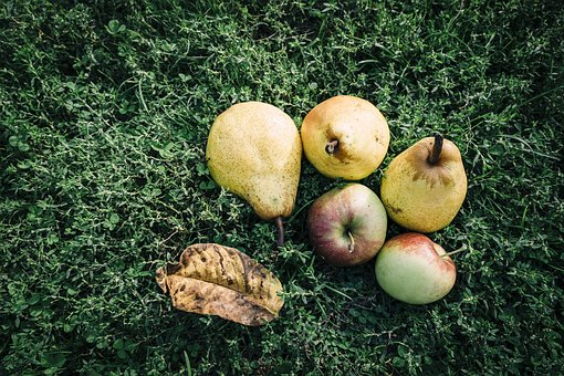 Fruit, Apple, Pear, Outdoors, Lawn, Dessert, Delicious