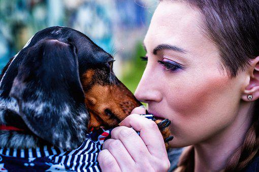Girl, Dog, Dachshund, Summer, Mood, Portrait, Pets