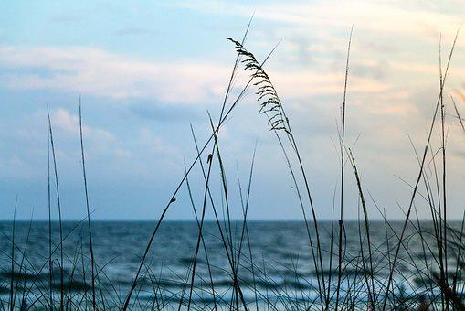 Coast, Relaxing, Ocean, Beach, Sea, Oats, Nature, Water