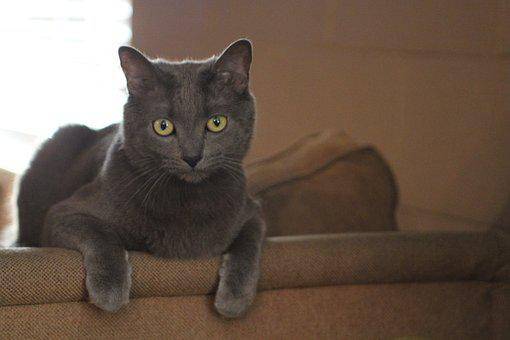 Cat, Kitty, Grey, Pet, Kitten, Animal, Cute, Domestic