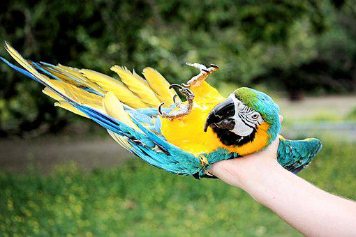 Parrot, Bird, Green, Nature, Animal, Exotic, Tropical