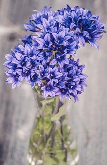 Flowers, Purple, Blue, Wood, Plank, Fresh, Nature
