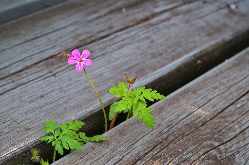 Plant, Stairs, Nature, Flowers, Leaves, Green