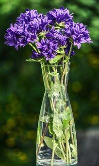 Flowers, Purple, Blue, Fresh, Nature, Plant, Background