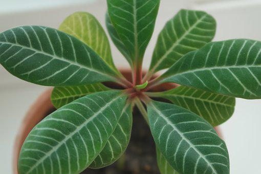 Houseplants, Plant, Indoor Plant, Indoor, In A Pot