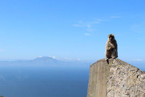 Ape, Gibraltar, Gb, Monkey, Animal, Africa View, Europe