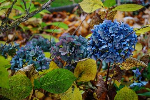 Autumn, Nature, Golden Autumn, Fall Foliage, Leaves