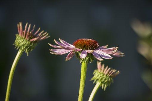 Summer, Flower, Violet, Boost, Garden, Summer Plants