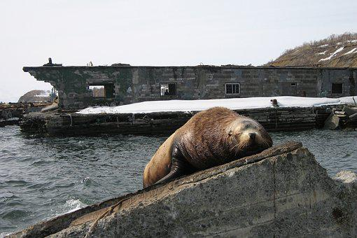 The Steller Sea Lion, Cleaver, Rookery, Vacation