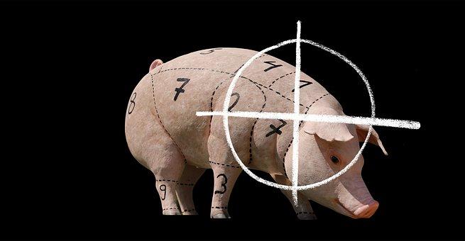 Pig, Animal Welfare, Cruelty To Animals, Animal World