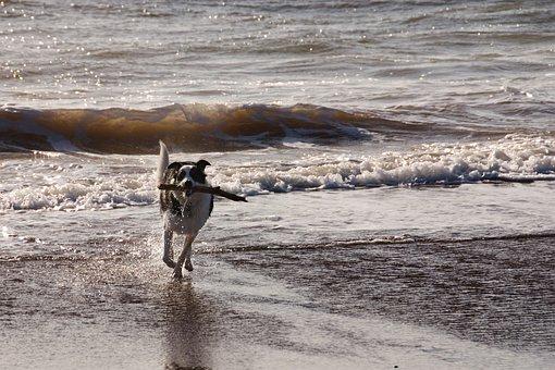 Dog, Beach, Sea, Running, Stick, Sun, Gray Sun