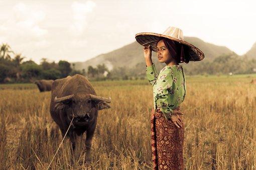 Paddy Field, Girl, West Sumatra, Indonesia