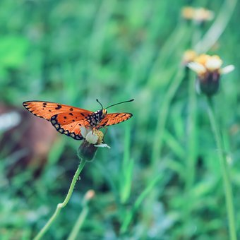 Butterfly, Wild, Insects, Creature, Natural