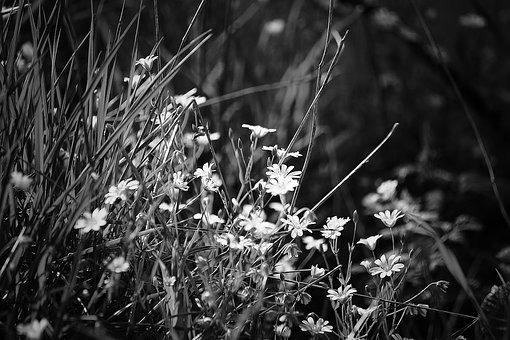 Flower, Nature, Blossom, Bloom, Outlines