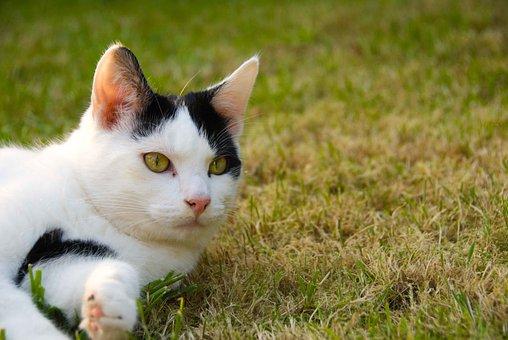 Cat, Cute, Pet, Outside, Lying, Grass