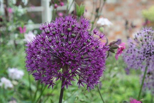 Flower, Purple, Purple Flower, Nature, Floral, Summer