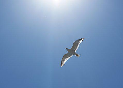 Seagull, Bird, Seevogel, Water Bird, Fly, Flight