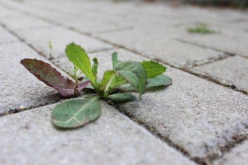 Weed, Stone, Away, Plant, Sidewalk, Overgrown, Close
