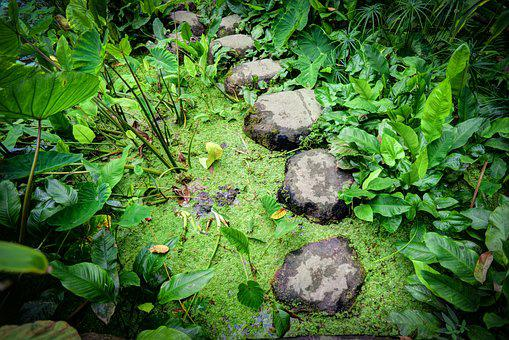 Stepping, Stones, Water, Step, Pond, Park, Rock, Green