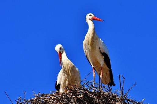 Storks, Pair, Birds, Stork, Fly, Rattle Stork, Bill