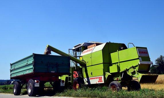 Harvest, Grain Harvest, Agriculture, Cornfield, Summer