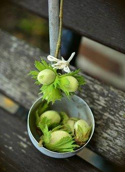 Nuts, Hazelnuts, Immature, Tree Fruit, Fruits