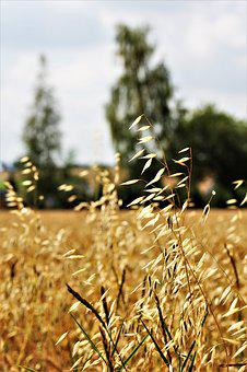 Oats, Agriculture, Cereals, Grain, Pet Food, Arable