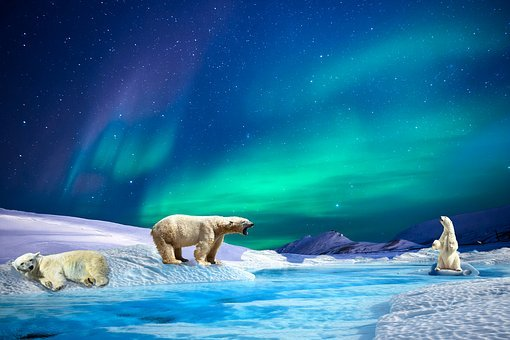 Aurora, Polar Bears, River, Glacier, Northern Lights