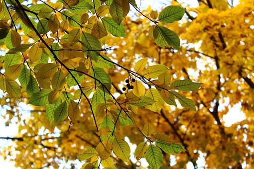 Leaves, Berry, Autumn, Macro, Closeup, Fruit, Nature